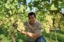 Winzer Andreas Schwarz schneidet die ersten Trauben für einen guten Wein.